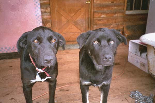 dogs.jpg (46048 bytes)